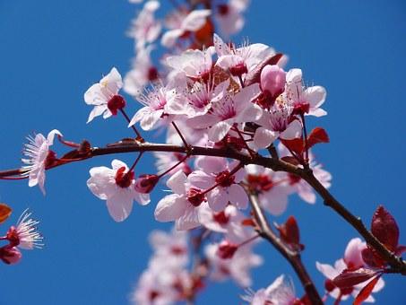 Zamkowe Noce Filmowe – pokaz filmu Kwiat wiśni i czerwona fasola