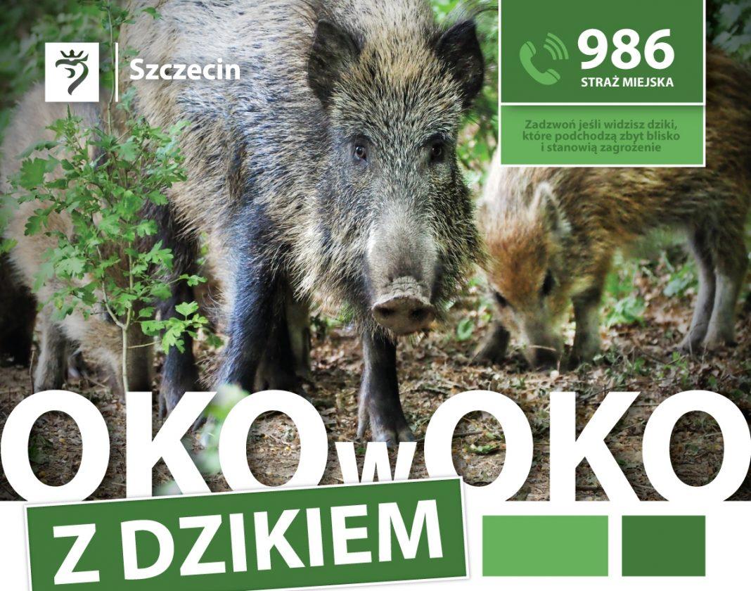 kampania informacyjna Oko w oko z dzikiem
