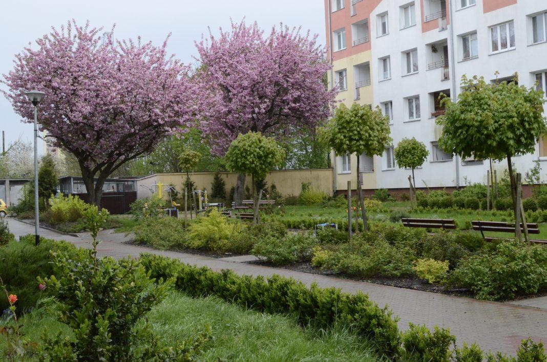 zielone podwórka i przedogródki