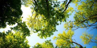 500 nowych drzew i krzewów