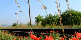 pociąg w barwach Pogoni Szczecin