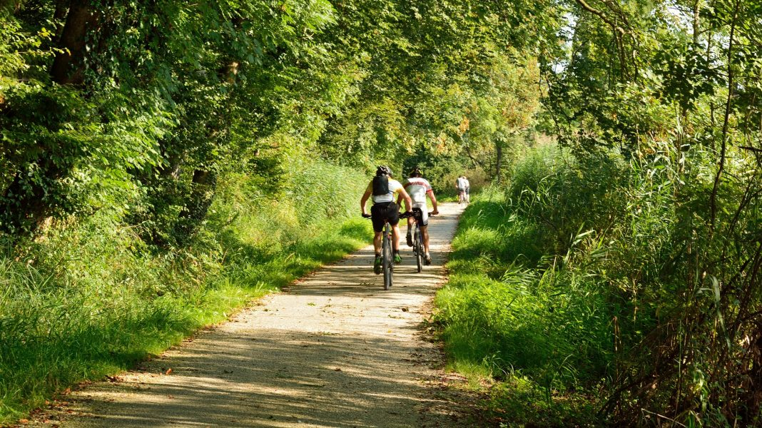 ścieżka rowerowa do Trzebieży