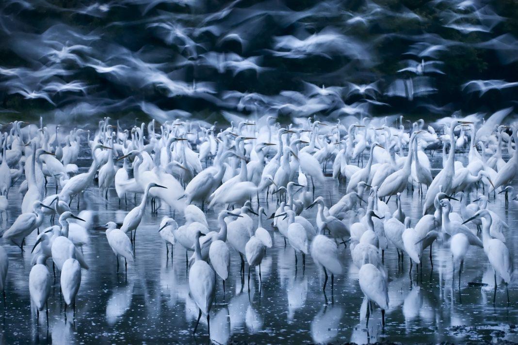Fotografia Dzikiej Przyrody