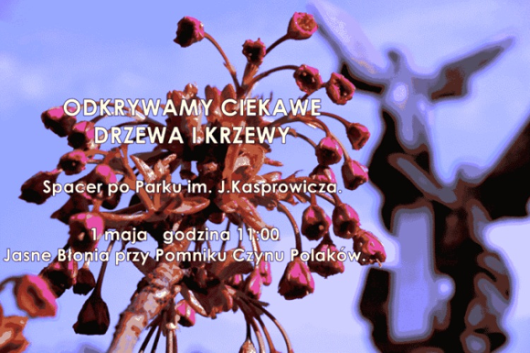 Odkrywamy ciekawe drzewa i krzewy Parku im. J.Kasprowicza