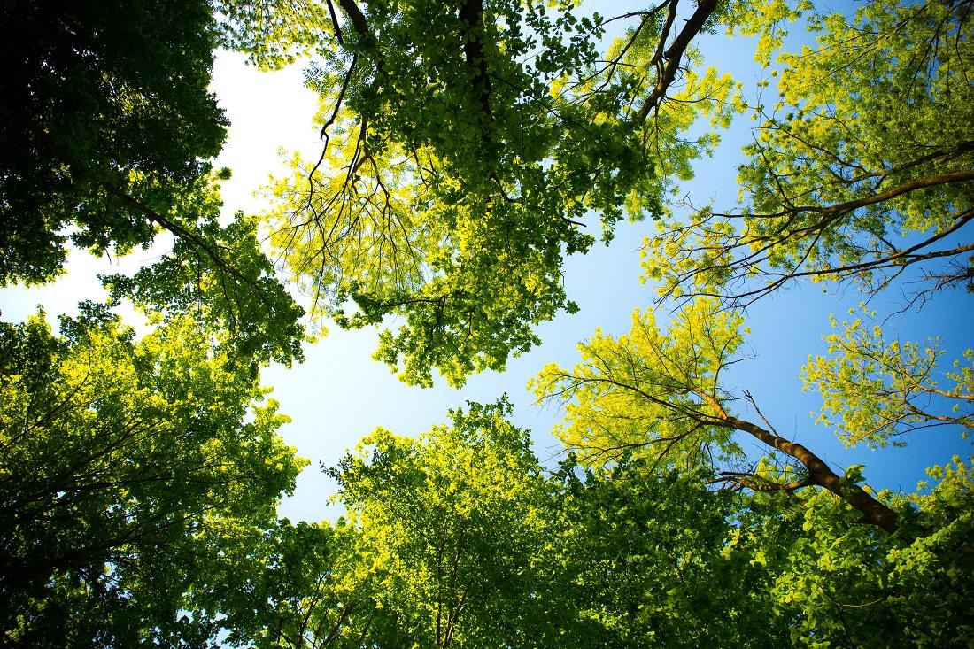 VIII Akcja Wiosennego Sprzątania