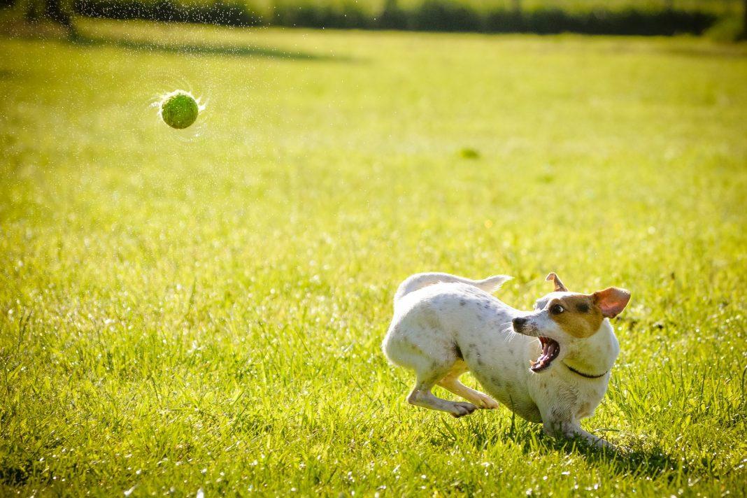 wybieg dla psów Gumieńce