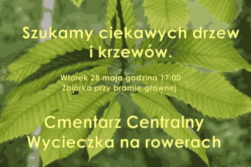 Szukamy ciekawych drzew i krzewów - Cmentarz Centralny.