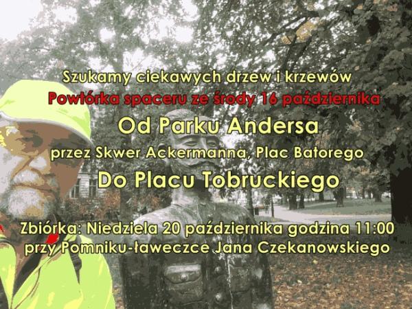 Szukamy ciekawych drzew i krzewów. Od Parku Andersa do Placu Tobruckiego.