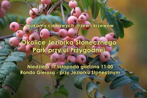 Szukamy ciekawych drzew i krzewów. J.Słoneczne - Park Przygodna