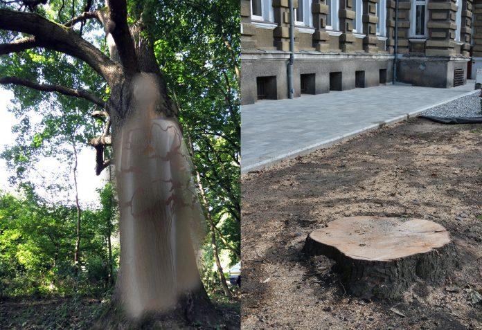 Marsz Duchów Drzew