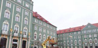 choinka Urząd Miasta Szczecin