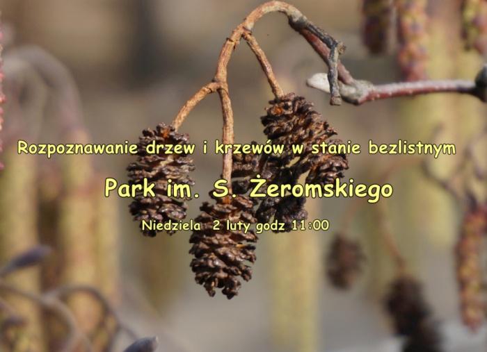 Rozpoznawanie drzew i krzewów w stanie bezlistnym. Park im. S. Żeromskiego