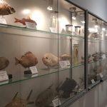 Muzeum Ichtiologiczne terminy zwiedzania