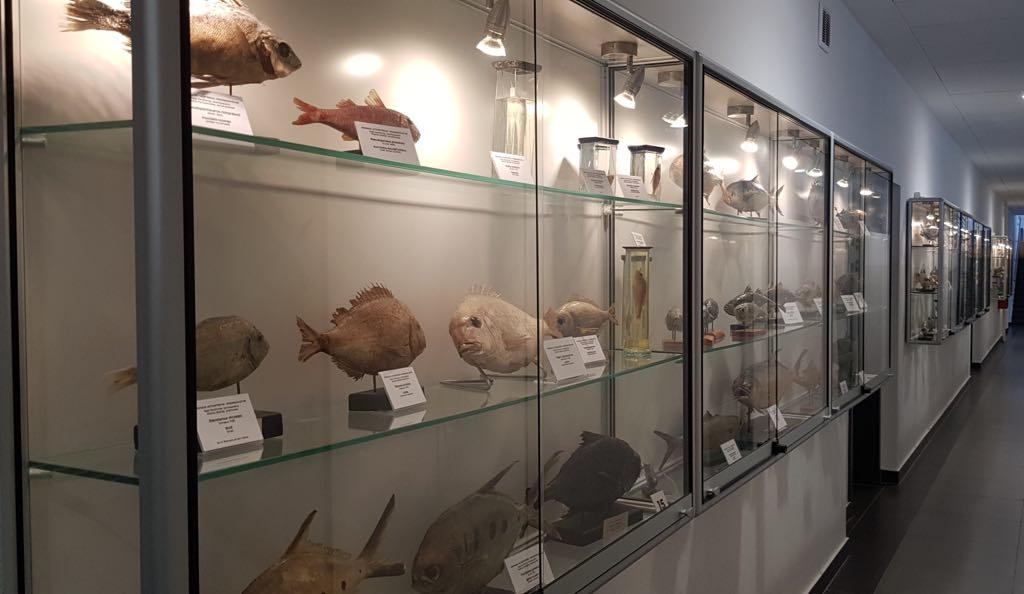 Muzeum Ichtiologiczne Wydział Nauk oŻywności iRybactwa ZUT