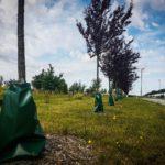sadzenie drzew Szczecin