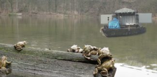 migracja ropuchy jezioro szmaragdowe zmiany