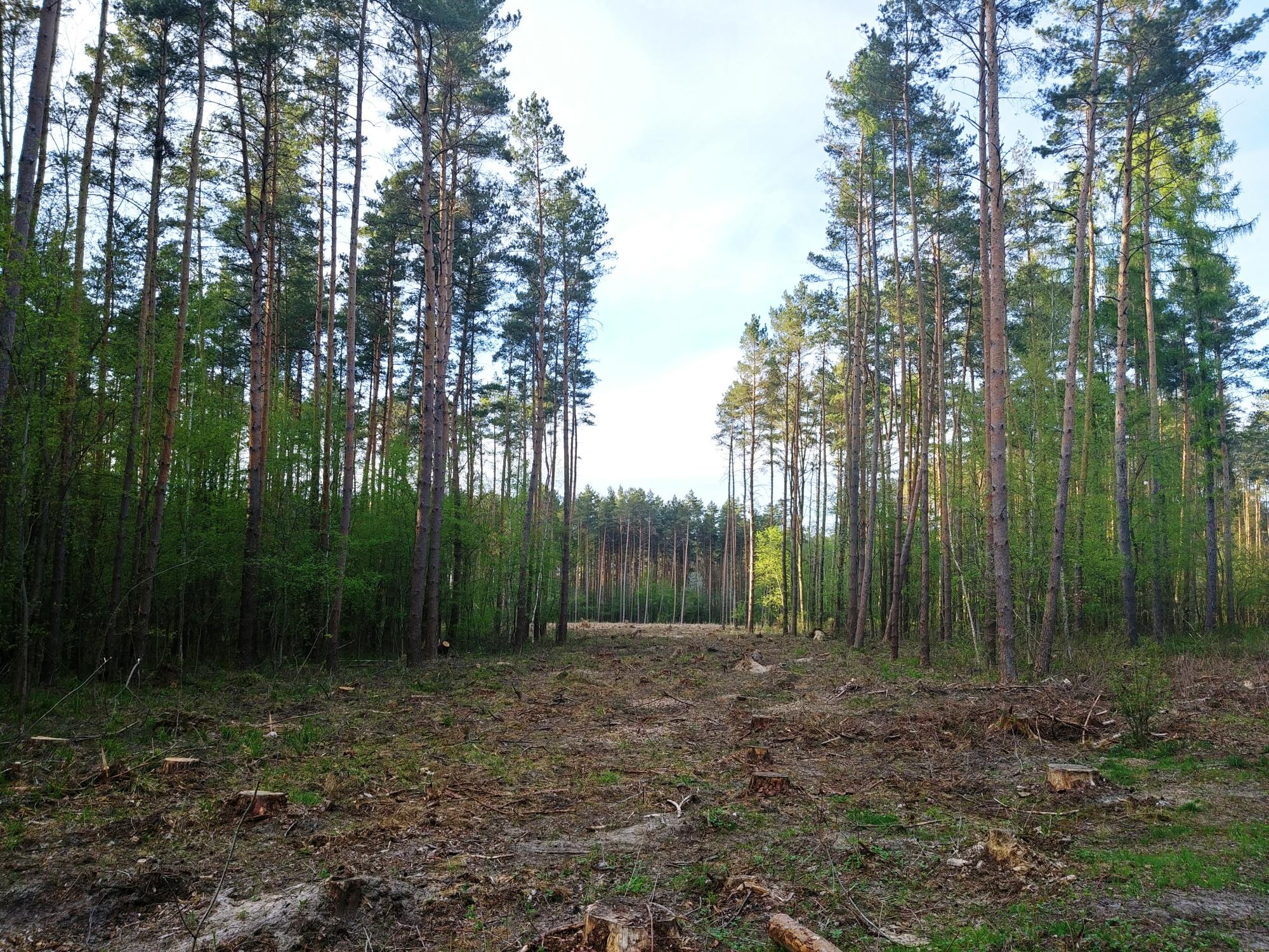 siedziba Lasy Państwowe Szczecin budowa przetarg unieważnienie