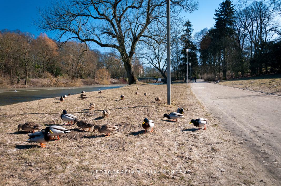 lasy parki Szczecin otwarcie epidemia