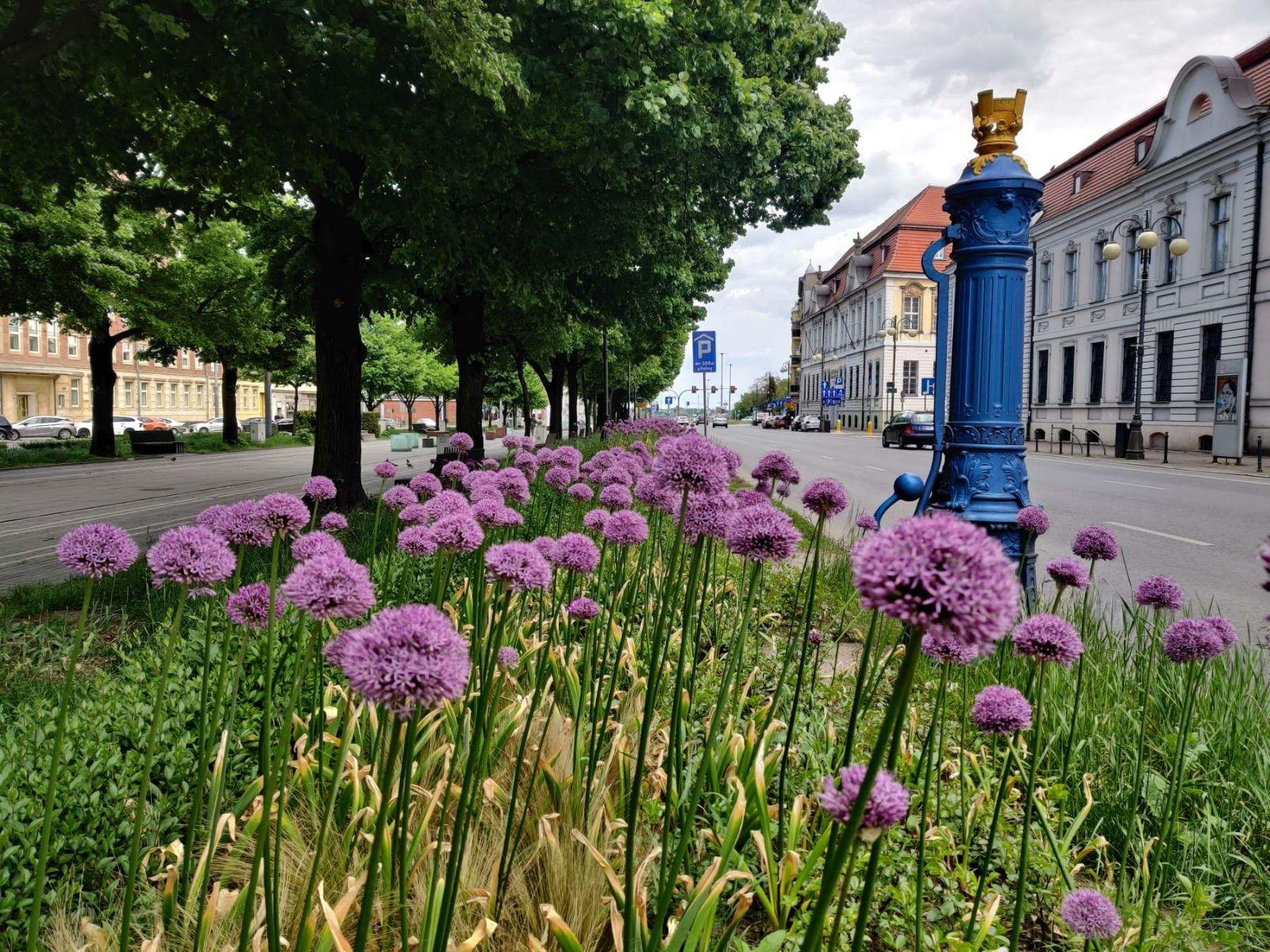 kwiaty sadzenie Park Kasprowicza Szczecin maj 2020