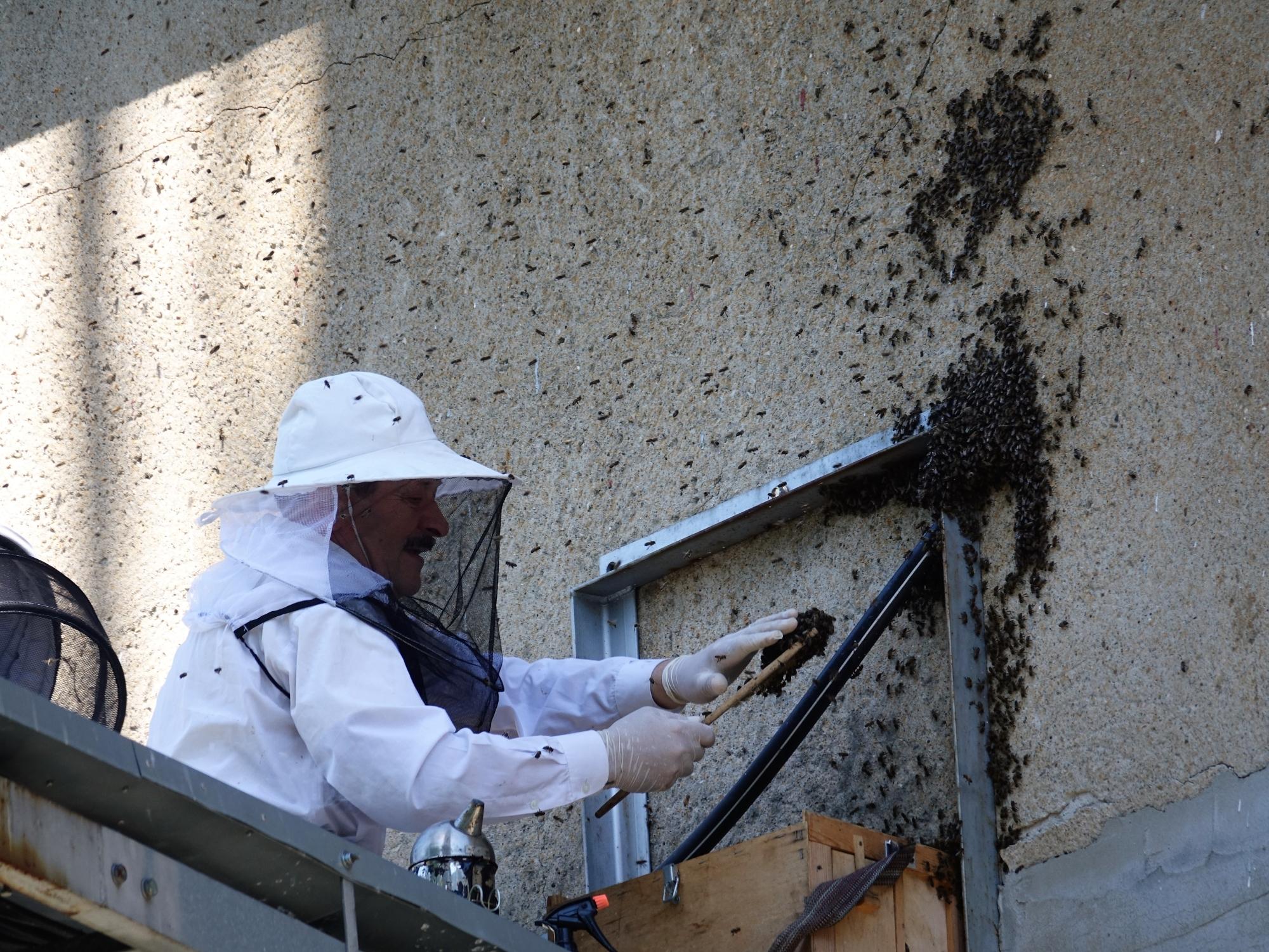 rój pszczoły szpital Zdroje