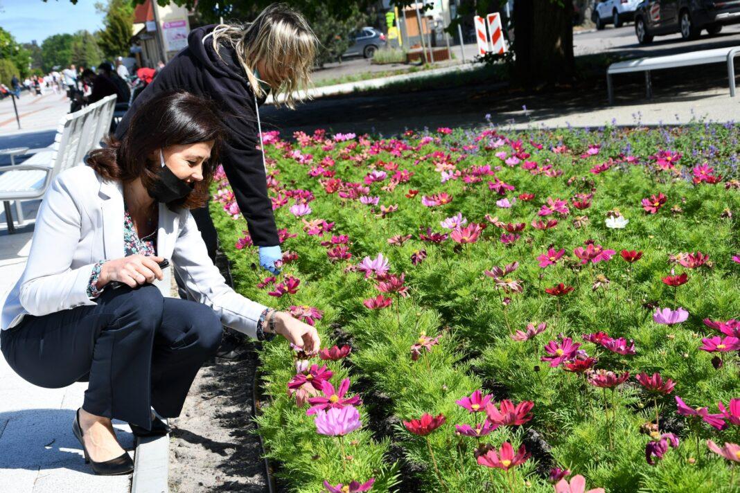 kwiaty promenada historyczna Świnoujście