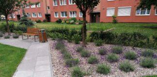 zielone podwórka przedogródki Szczecin 2020