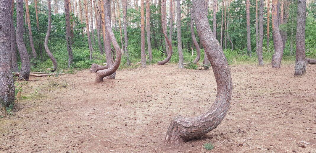 Krzywy Las rewitalizacja