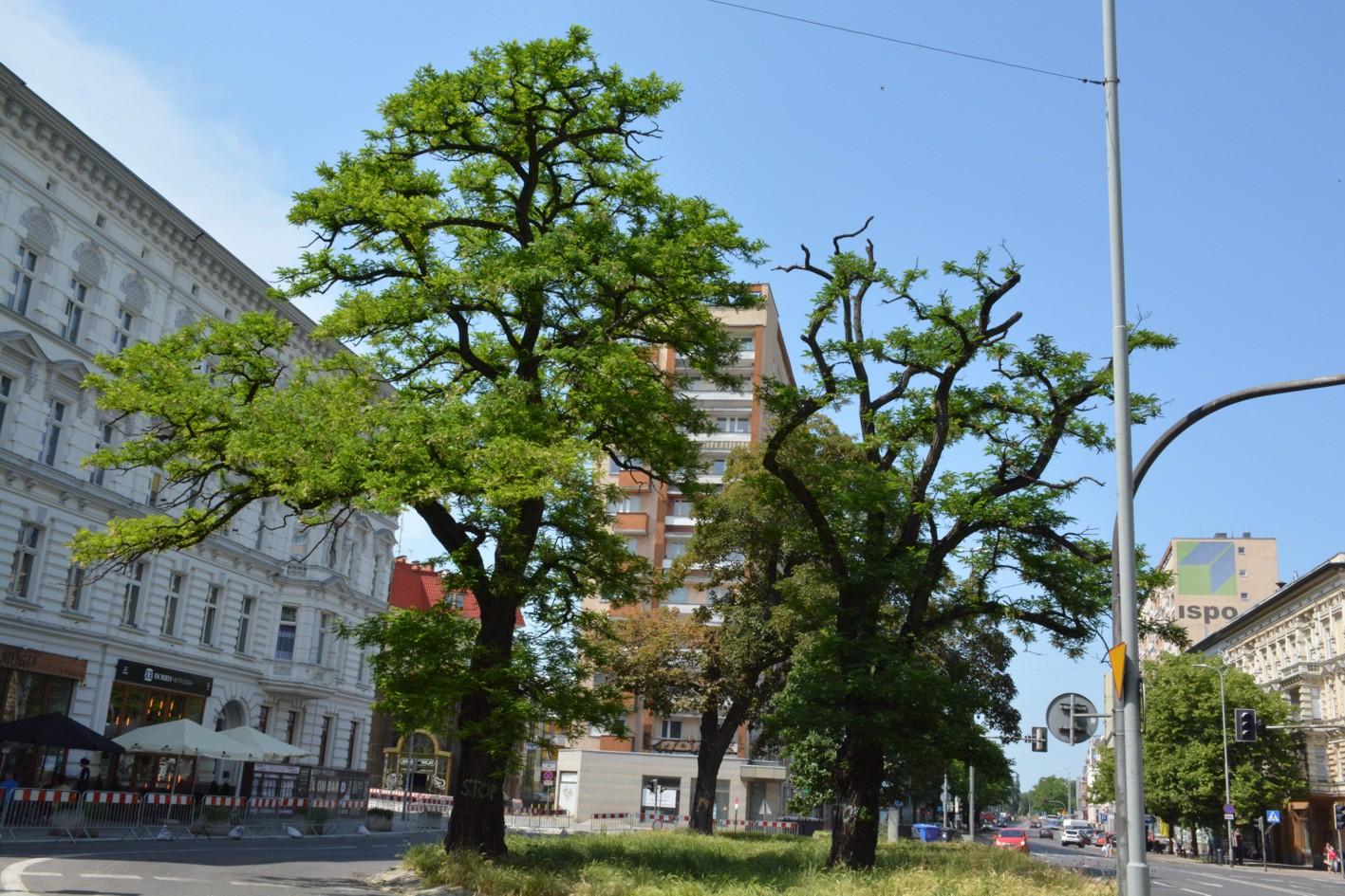 al. Wojska Polskiego wycinka drzew
