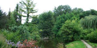 Ogród Dendrologiczny Przelewice przejęcie oferty