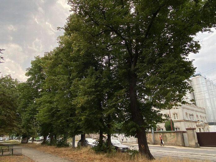 ul. Chmielewskiego Szczecin drzewa wycinka