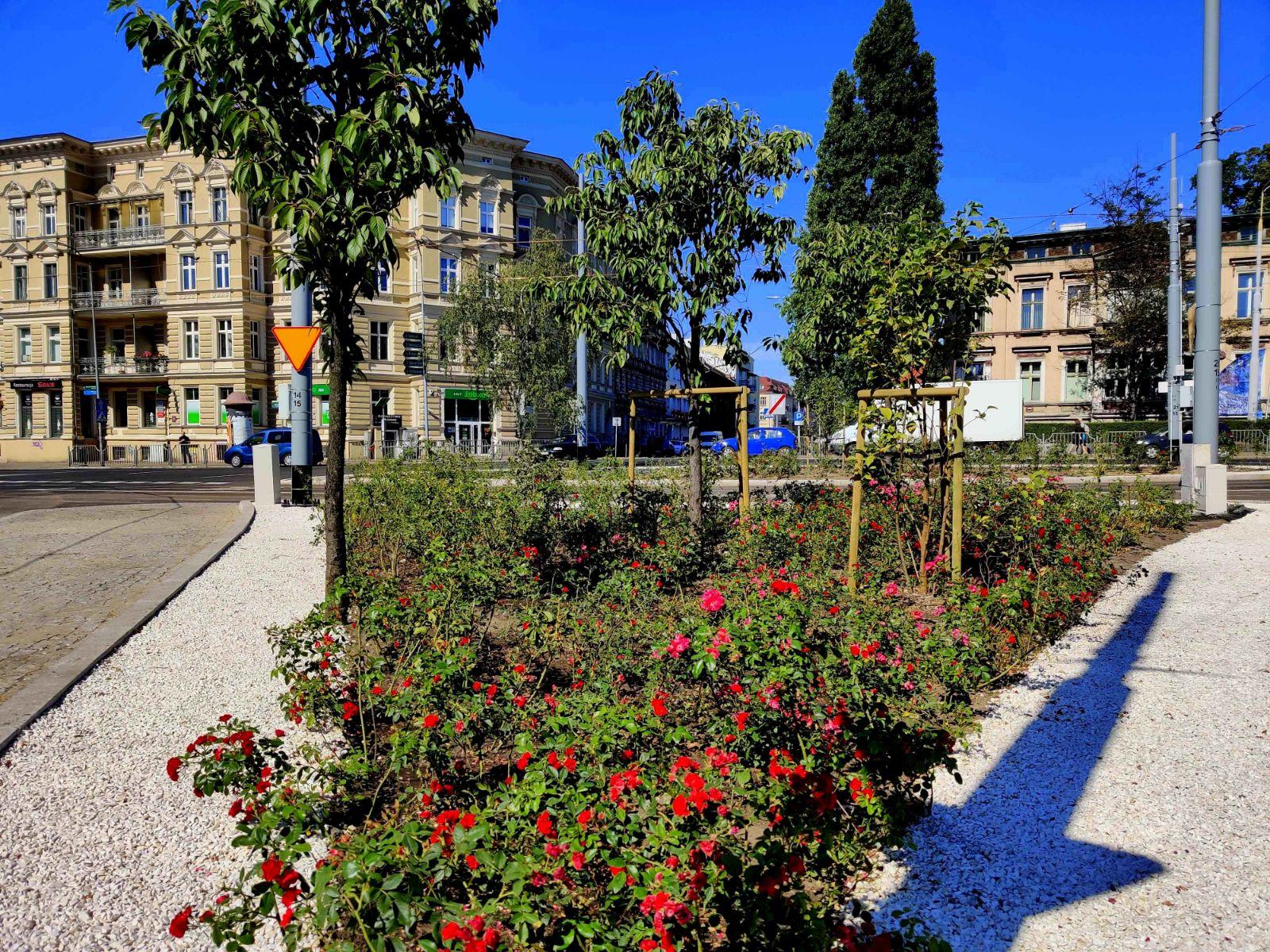 plac Szarych Szeregów zieleń rośliny