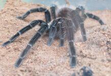 wystawa pająków dworzec Pogorzelica
