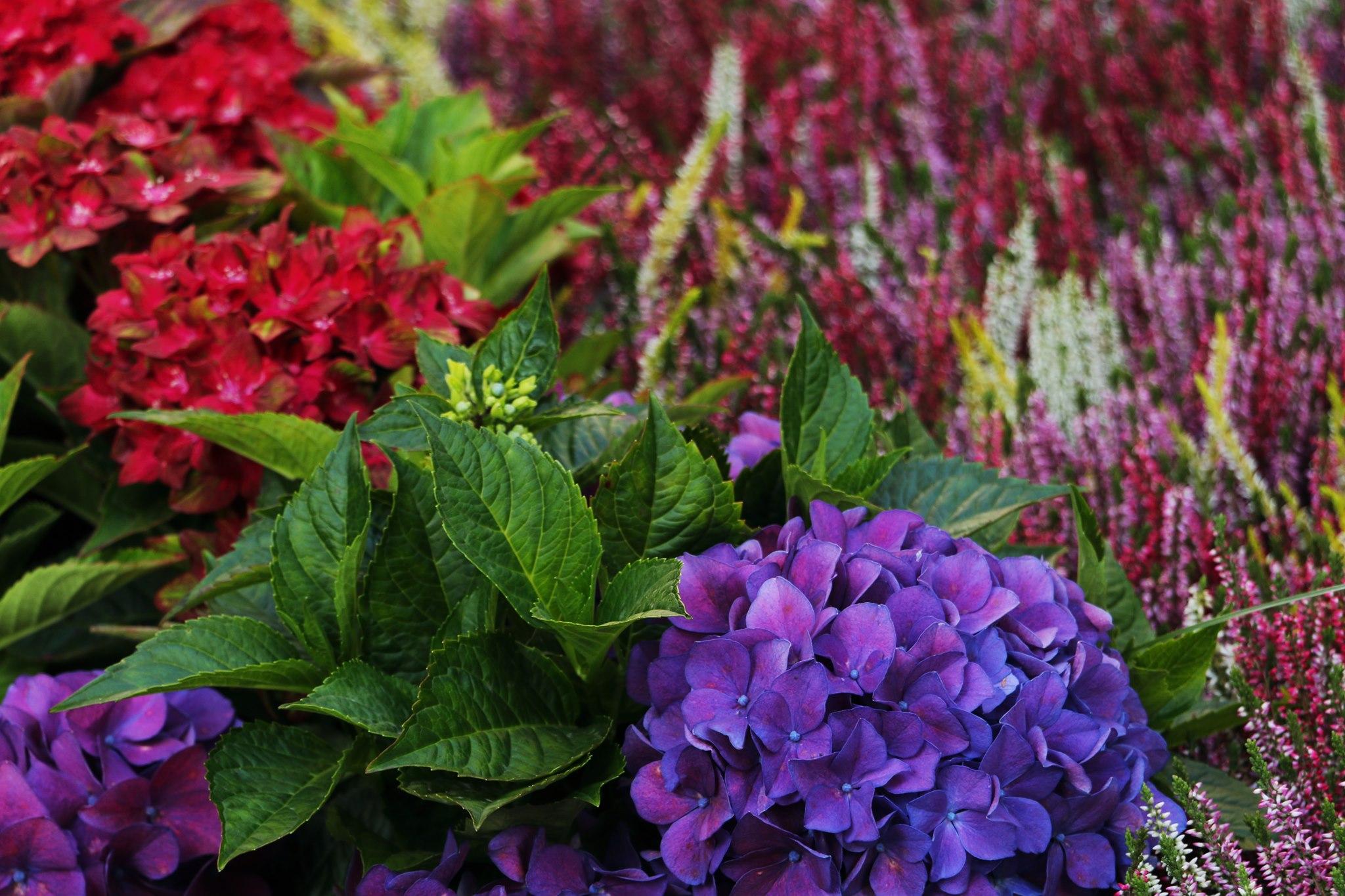 Pamiętajcie o ogrodach - Kiermasz Ogrodniczy na Wałach Chrobrego