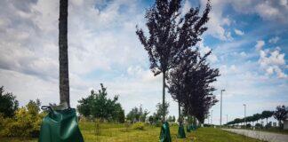 nasadzenia drzewa Szczecin przetarg wrzesień 2020
