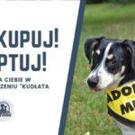 Stowarzyszenie Kudłata Przystań rozmowa
