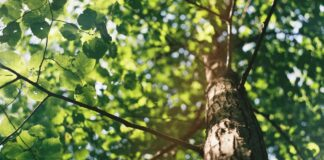nasadzenia-nowych-drzew-Szczecin