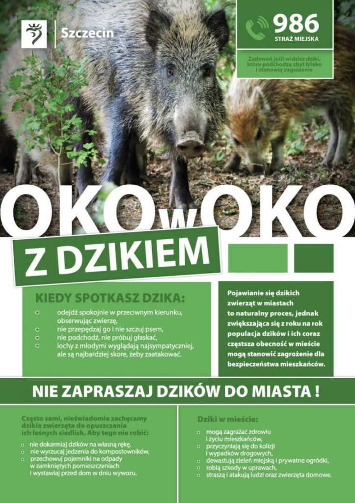 Na terenie Szczecina niejest planowany odstrzał dzików