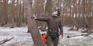 Drugie ższyszkobranie w Krzywym Lesie