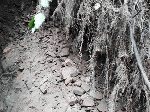 drzewa-ze-skarpy-zamkowej