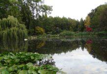 ogrod dendrologiczny