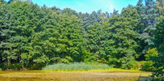Coroczne sadzenie drzew