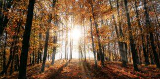 Międzynarodowy Dzień Lasu spacer po Puszczy Bukowej