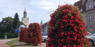 Strefy reprezentacyjne dekoracje kwiatowe