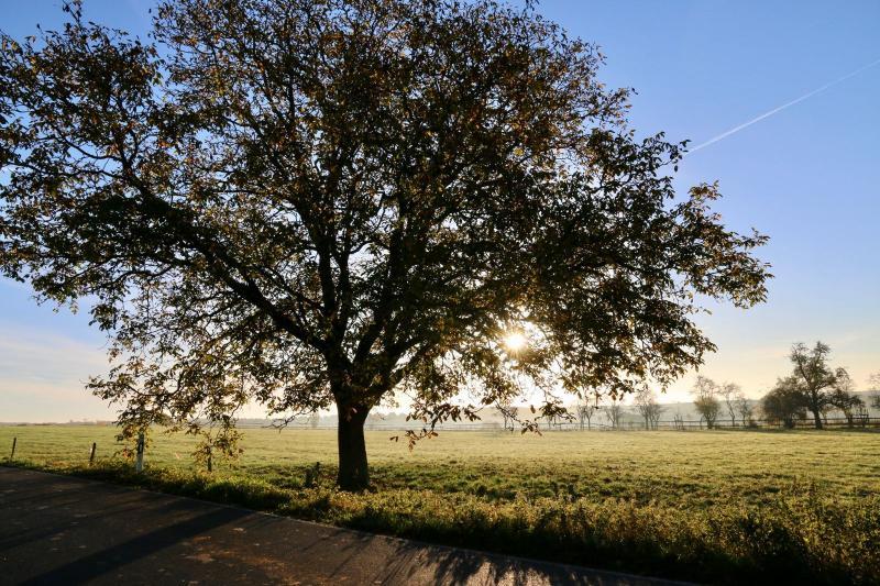 Akcja Liść Dębu – tysiące drzew trafi do Szczecinian