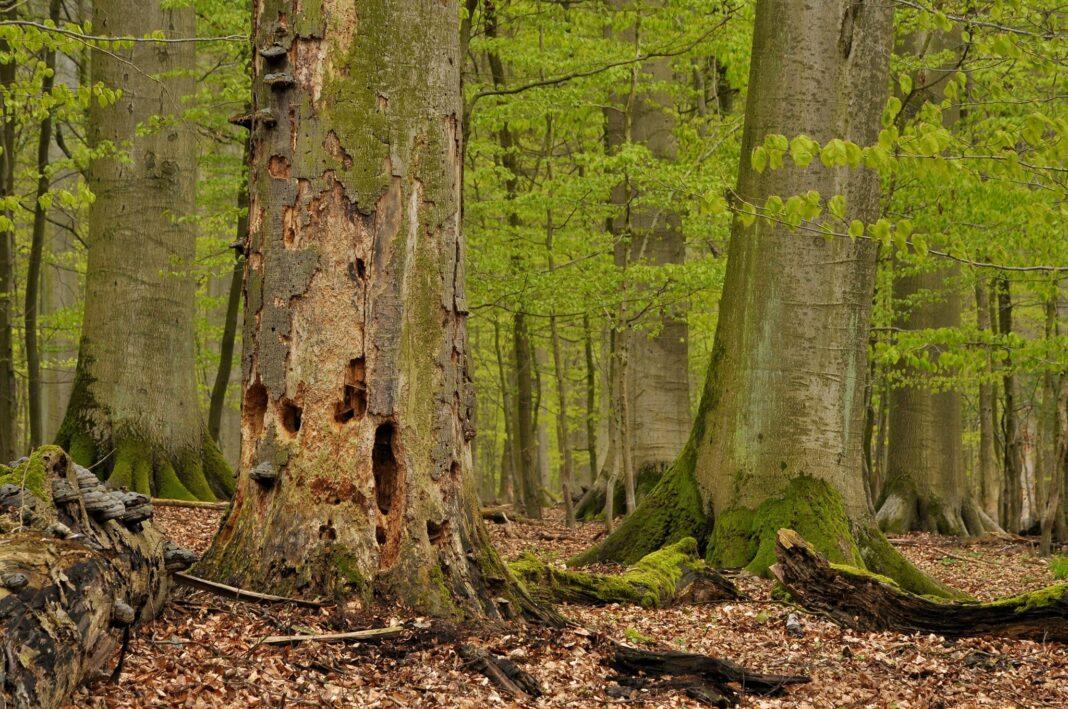 Szczeciński Park Narodowy zamiast Puszczy Bukowej