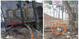 petycja przeciwko wycince drzew na Osiedlu Nowe Miasto