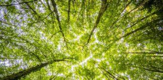Zaprojektuj mapę Lasów Narodowychdowe