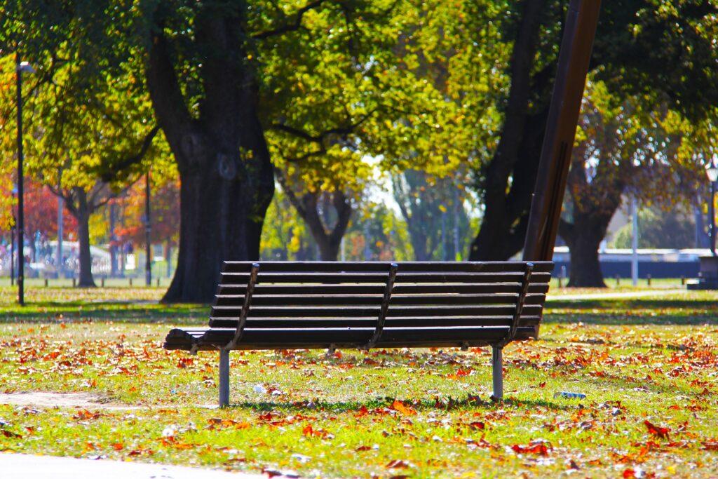 drzewa miejskie tozielony kapitał