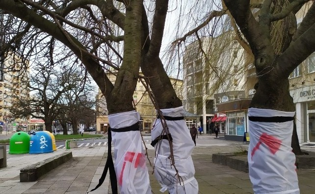 drzewa-al-wojska-polskiego-szczecin