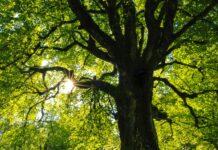 1000 drzew dla Szczecina